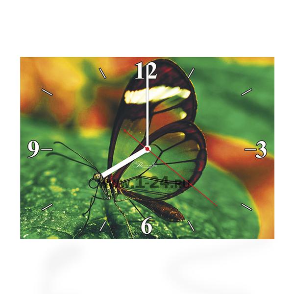 Прозрачная бабочка, двойные со стеклом